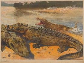 "Miehold Verlag: Crocodiles. c1930. An original vintage colour print. 33"" x 24"". [NATHISp7636]"