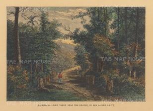 Sumatra: Pelambangg. View in the sacred grove of Kuto Besak Fort.