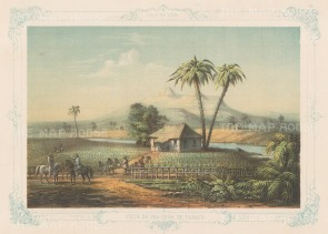 "Mialhe: Vista De Una Vega De Tabaco, Cuba. 1855. An original antique chromolithograph. 10"" x 8"". [WINDp1067]"