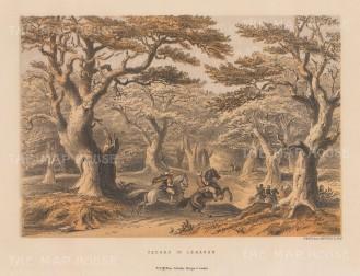 "McFarlane: Cedars of Lebanon. c1880. An original colour antique lithograph. 9"" x 6"". [MEASTp1666]"