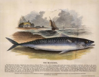 Mackerel with descriptive text: Founded in 1698, the SPCK is the oldest Anglican mission and publishing house of the Church of England.