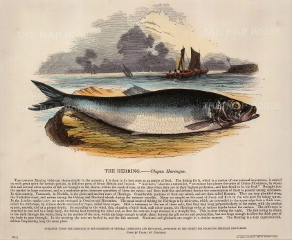 Herring with descriptive text: Founded in 1698, the SPCK is the oldest Anglican mission and publishing house of the Church of England.