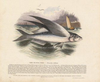 Flying Fish with descriptive text: Founded in 1698, the SPCK is the oldest Anglican mission and publishing house of the Church of England.