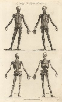 Myology: Four anterior and posterior figures showing the third and fourth muscle layers.