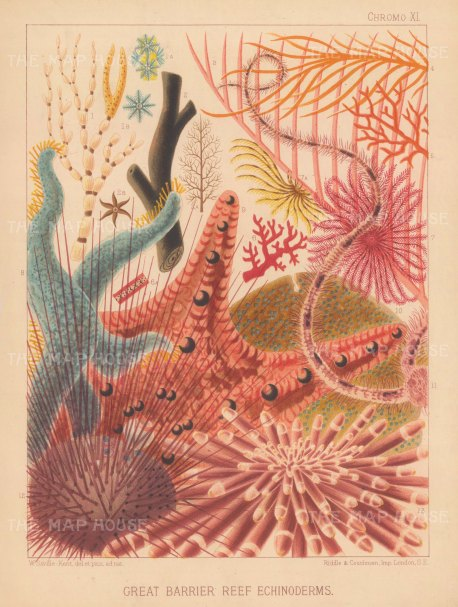 Great Barrier Reef Echinoderms: 13 Reef Corals and Echinodermata. Key available.