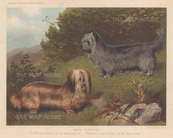 """Cassell: Terriers. 1890. An original antique chromolithograph. 9"""" x 7"""". [NATHISp3462]"""