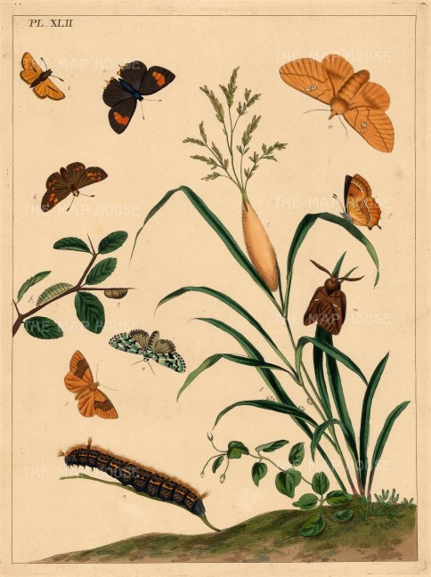 "Harris: Moths and Caterpillars. 1772. An original colour antique copper engraving. 10"" x 12"". [NATHISp4780]"