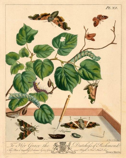 "Harris: Moths and Caterpillars. 1772. An original colour antique copper engraving. 10"" x 12"". [NATHISp5970]"