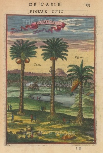 "Mallet: Palm Trees. 1683. A hand coloured original antique copper engraving. 4"" x 6"". [NATHISp6485]"