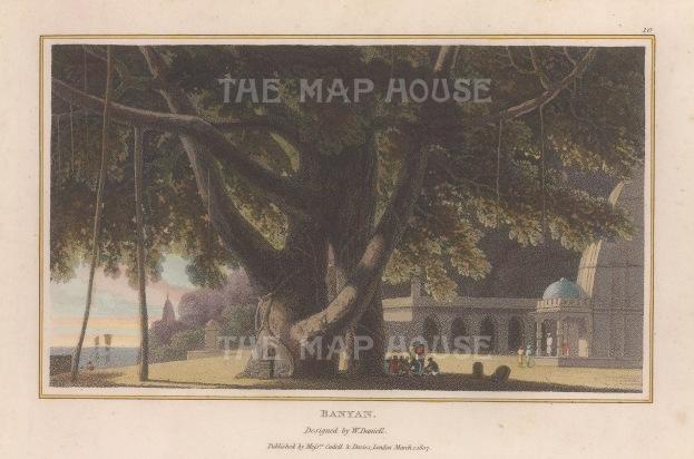 "Daniell: Banyon Tree. 1807. A hand coloured original antique aquatint. 8"" x 5"". [NATHISp6782]"