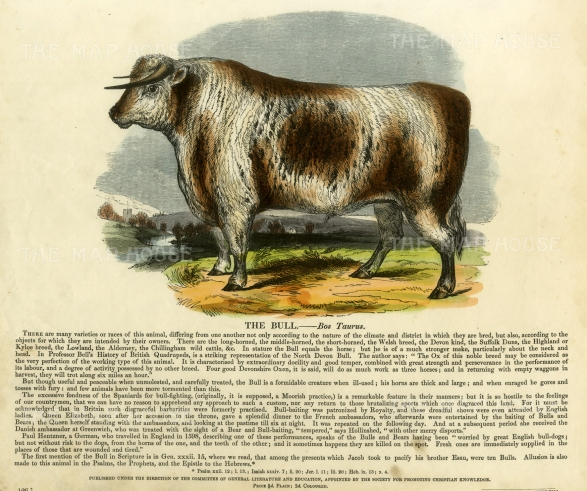 Bull with descriptive text. Founded in 1698, the SPCK is the oldest Anglican mission and publishing house of the Church of England.