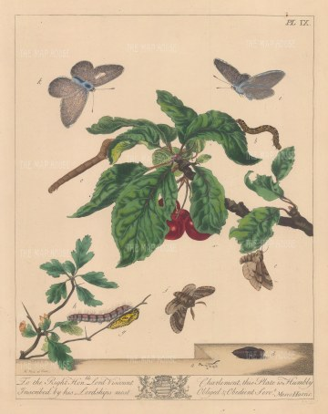 "Harris: Moths and Caterpillars. 1772. An original colour antique copper engraving. 10"" x 12"". [NATHISp7149]"