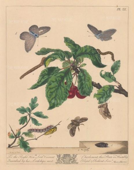 "Harris: Moths and Caterpillars. 1772. An original colour antique copper engraving. 10"" x 12"". [NATHISp7149]"