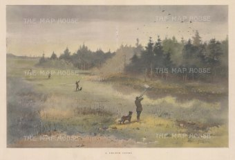 Grouse Season: A Chance Covey. After the ornithological illustrator George Edward Lodge.
