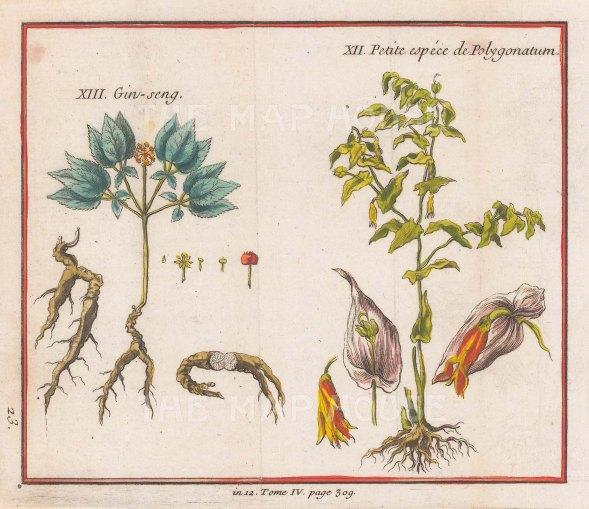 American Panax (Ginseng) and Soloman's Seal (Polygonatume).
