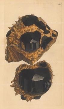 Argilla electrica. Tourmaline, from Chudleigh, Devon.