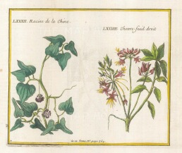 "Bellin: Honeysuckle and Racine de la Chine. 1753. A hand coloured original antique copper engraving. 6"" x 5"". [FLORAp3122]"