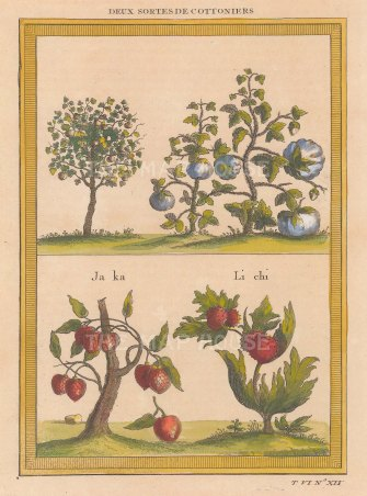 Cotton plants: Two types, Jack-fruit and Li Chi.