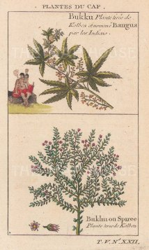 "Bellin: Bangu & Spirea. 1749. A hand coloured original antique copper engraving. 3"" x 5"". [FLORAp3173]"