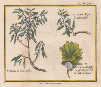 "Bellin: Candle-berry Myrtle and Viriginian May Apple. 1753. A hand coloured original antique copper engraving. 6"" x 5"". [FLORAp3176]"