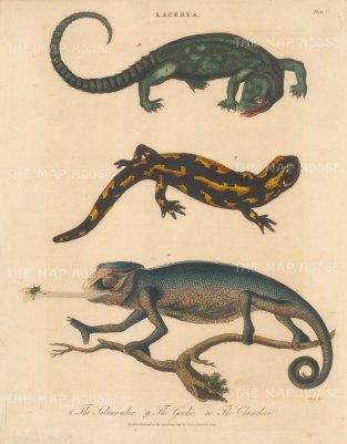 Lizards (Lacerta): Chameleon, Geeko and Salamander. Engraved by John Pass.