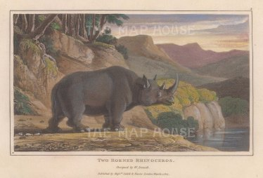 "Daniell: Two-horned Asian Rhinoceros. 1807. A hand coloured original colour antique aquatint. 7"" x 4"". [NATHISp7863]"