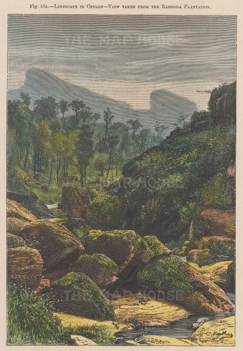 Landscape in Ceylon: View taken from Ramboda Plantation.