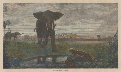 "Illustrated London News: Elephant & Jaguar. 1871. A hand coloured original antique wood engraving. 14"" x 9"". [INDp1427]"