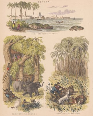 Treble view: Panorama of Colombo port, an elephant hunt from Le Prince, and a boar hunt from Capt. Frederick Marryat's.