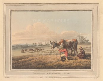 "Orme: Shooting Antelopes. 1813. An original colour antique aquatint. 8"" x 6"". [INDp1527]"
