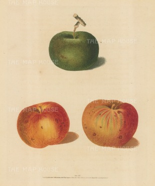 Apples: Rhenet, Margill and Pippin.