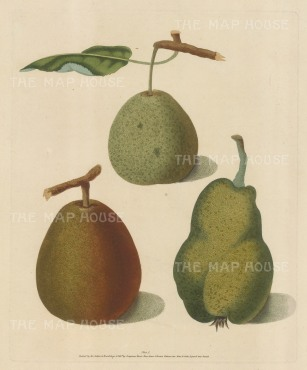 "Brookshaw: Pears. 1817. An original colour antique mixed method engraving. 8"" x 11"". [NATHISp2355]"