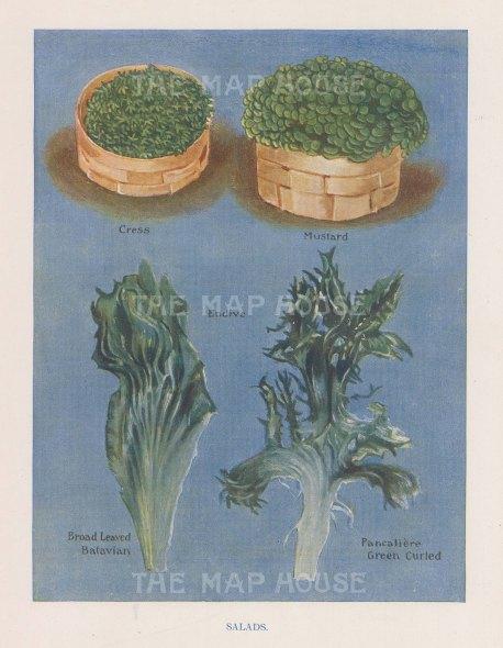 Salad: Cress, Mustard and Endives; Pancliere and Batavian.