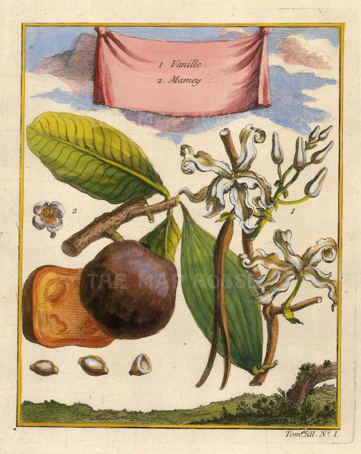 "Bellin: Vanille. 1754. A hand coloured original antique copper engraving. 5"" x 8"". [NATHISp6982]"