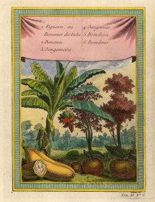 Bananas, Jangomas Plum and Brindon Apple.