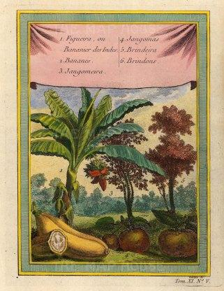 Bananas, Jangomas Plum and Brindon Apple.