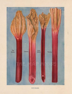 Rhubarb: The Sutton, Linneaus, Early Albert and Victoria.
