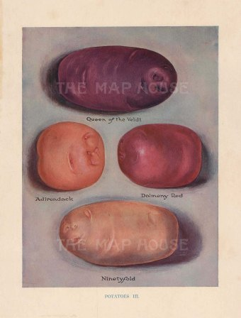 Potatoes: Queen of the Veldt, Aidrondack, Dalmeny Red and Ninetyfold.
