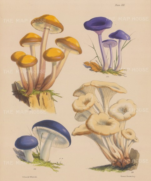 Agaricus (two varieties), Russula and Lentinus.