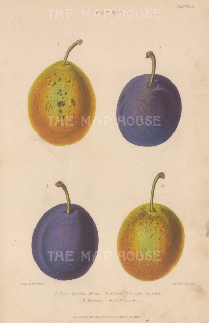 Plums: Coes Golden Drop, Reine Calude Violette, Kirkes and Jefferson. After Augusta Withers.