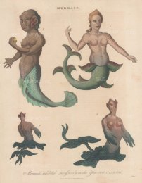 Mermaids found and exhibited in France in 1758 (1), London in 1775 (2) and London in 1794 (3, 4). Engraved by John Pass.