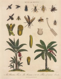 With details of fruit and ten specimens of fruit flies.