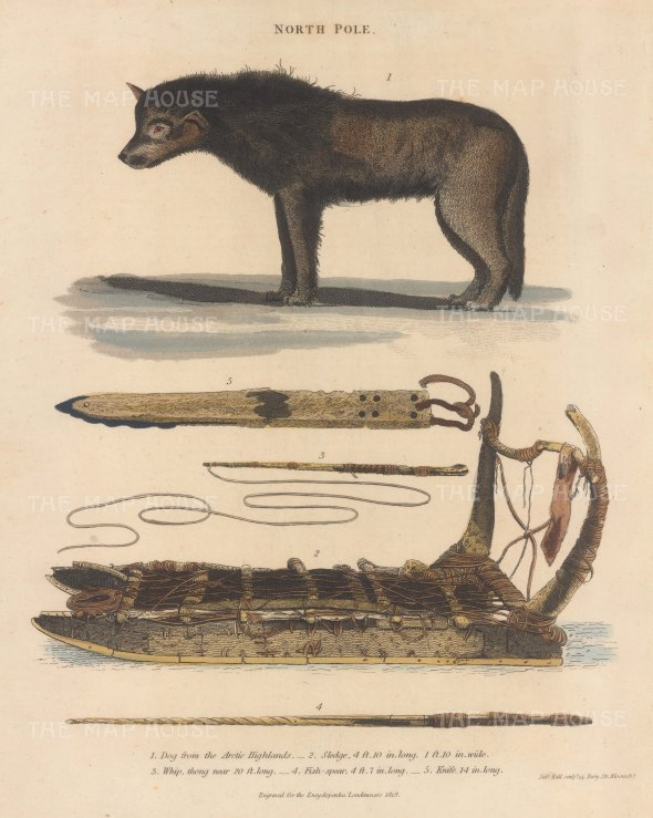 Arctic dog from Baffin Bay, sledge, whip, knife and spear.
