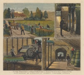 St. Hubert's Vineyard, Victoria: Four views of picking, grinding, running and tasting.