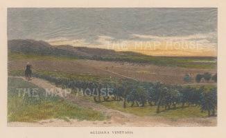 "Picturesque Australia: Auldana Vineyard, Adelaide. 1888. A hand coloured original antique wood engraving. 7"" x 5"". [AUSp741]"