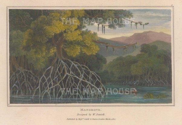 """Daniell: Mangrove. 1807. A hand coloured original antique aquatint. 7"""" x 4"""". [NATHISp7870]"""