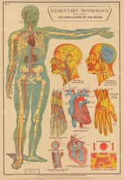 Elementary Physiology.: Circulation of the Blood with details of Brain, Heart and Vessels