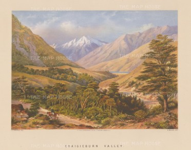 Craigieburn Valley: View on the west coast road from Christchurch to Hokitika.