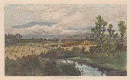 "Picturesque Australia: Taiera Plain. c1880. A hand coloured original antique wood engraving. 11"" x 9"". [NWZp229]"