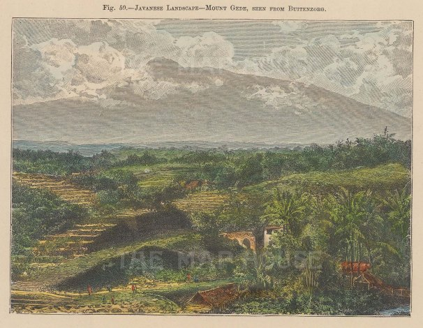 "Brown: Mount Gede, Java. 1885. A hand coloured original antique wood engraving. 7"" x 5"". [SEASp1093]"